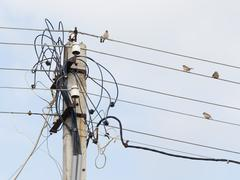 sparrows on the wires - stock photo