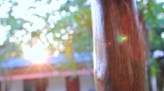 Lens Flare Over Wooden Post Trees Sunlight Hand Held Slow Motion Stock Footage