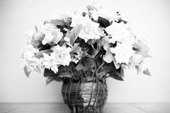 flower black and white color tone style - stock photo
