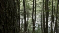 Stock Video Footage of Lakefront woods, shore with rippling water in forest