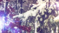Pine Branch And Red Berries in The Snow, ind Stirs The Branches of The Fir, a Stock Footage
