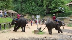 Elephant Show.13 Stock Footage