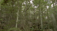 Stock Video Footage of Spooky Woods in New England, Panning Establishing Shot