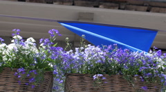 A blue hanging banner with the purple flower Stock Footage