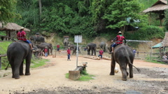 Elephant Show.12 Stock Footage