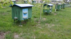 A beehive is an enclosed structure in which some honey bee species Stock Footage