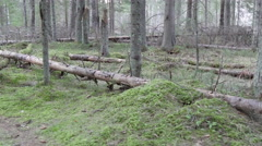 Trunks of the birch tree lying on the ground Stock Footage