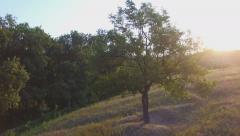 Stock Video Footage of Aero Flight near the alone tree on sunset