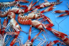 Mediterranean crustacean, Nephrops Norvegicus Stock Photos