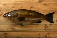 Grouper fish seafood, fishing catch over wood - stock photo