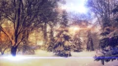 Panorama of The Fairy Forest, Sunny Winter Day, Huge Snow-Covered Fir, Snowing Stock Footage