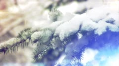 Wind Stirs The Branches of The Fir, Pine Branch in The Snow on Windy Weather, Stock Footage