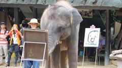 Elephant Show.19 Stock Footage