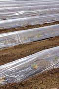 Sprouts greenhouse glass house plastic lines Stock Photos