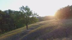 Aero Flight near the alone tree on sunset - stock footage
