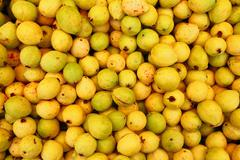 Buayaba o guayabilla fruit Psidium guajava Linnaeus - stock photo