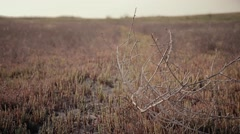 Stock Video Footage of dry twigs flutter in the wind against a background of reddish grass