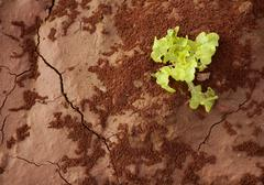 Lettuce green outbreak over red clay floor - stock photo