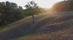 Aero Flight over the alone tree on sunset - stock footage