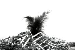 Steel chain mess and soft feather contrast Stock Photos