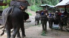 Elephant Show.23 Stock Footage