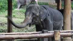 Elephant Show Stock Footage