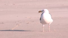 Seagul Shaking head Stock Footage