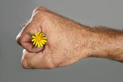 Stock Photo of Concept and contrast of hairy man hand and flower