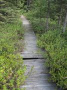 Bog Wetland Boardwalk Stock Photos