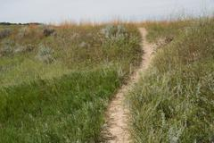 Bison Trail Over Hill - stock photo