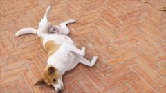 Dog laying on pavement under sun light - stock footage