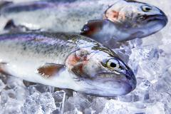 fresh raw trout whole on ice - stock photo