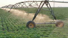 Agriculture, soy bean field watering equipment in sunset - stock footage