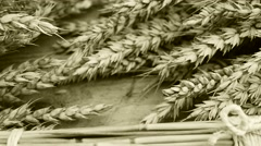 Still life with wheat and barley, shot with slider,color shade Stock Footage