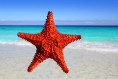 starfish isolated in a tropical turquoise beach - stock photo