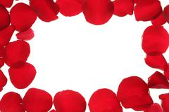 Red rose petals frame border, white copy space Stock Photos