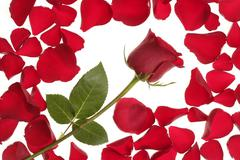Red rose in a petals border frame - stock photo