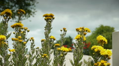 Yellow flowers at a canadian memorial cemetery Stock Footage