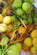 Coconuts fresh crop harvest green and yellow - stock photo