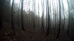 Scorched forest in autumn fog - stock footage