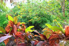 Jungle rainforest Yucatan Mexico Central America - stock photo