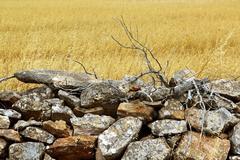 masonry stone wall golden summer field - stock photo