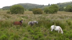 Three horses grazing and wagging their tails to keep flies off Stock Footage