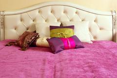 Diamond upholstery bed head pink blanket Stock Photos