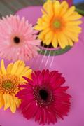 Hippie flower yellow pink gerbera on guitar Stock Photos