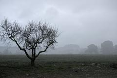 Dried tree vanish into the winter fog - stock photo
