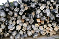 background with stacked wood trunks - stock photo