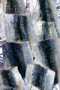 Sardine fish fillet skin texture on market Kuvituskuvat