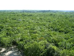 Stock Photo of jungle aerial view in central america Mexico