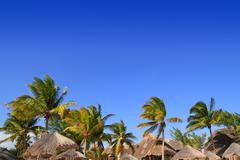 Stock Photo of Mayan riviera tropical sunroof palm trees blue sky